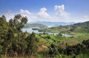 Rwanda : champs au bord du lac Kivu